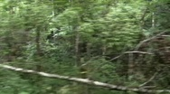 Stock Video Footage of Riding a Train Through The Woods02