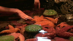 Childrens Hands Touching Starfish in Marine Touch Pool at Aquarium Stock Footage