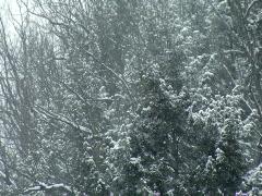 Winter Scene 480 Stock Footage