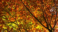 Stock Video Footage of autumn breeze03