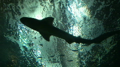 Stock Video Footage of Shark Habitat