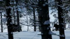 Two European moose run through deep snow Stock Footage