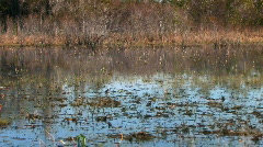 Floating by a small bird in Okefenokee swamp Stock Footage
