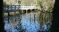 Boardwalk Bridge In Boyd Hill Nature Park HD Footage
