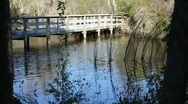 Stock Video Footage of Boardwalk Bridge In Boyd Hill Nature Park