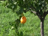 Orange Stock Footage