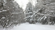 Man walks on the snowy woods Stock Footage