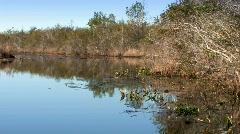 Okefenokee swamp wildlife refuge on winter morning  Stock Footage