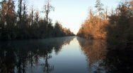 Okefenokee swamp wildlife refuge at sunrise Stock Footage