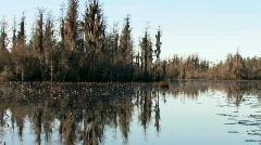 Inside the Okefenokee swamp wildlife refuge at sunrise  Stock Footage