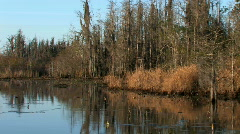 Okefenokee swamp wildlife refuge at sunrise  Stock Footage
