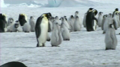 Emperor penguin colony - stock footage