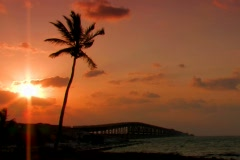 Palm tree with red sunrise by overseas highway Stock Footage