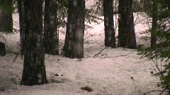 Snow storm snowflakes gently falling in a winter forest cold peaceful  Stock Footage