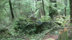 Forest walk. Stock Footage