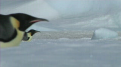 Emperor penguins sliding on their belly Stock Footage