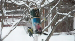 A lot of small titmice try to get sunflower seeds from paper bag. Stock Footage
