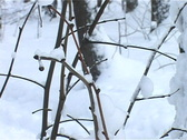 Stock Video Footage of On a winter ski track