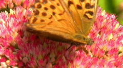 Butterflys and Bees Stock Footage