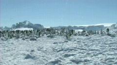 Emperor penguin colony Stock Footage