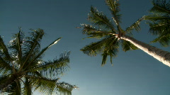 Palm Tree - stock footage