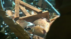 Freshwater fish in pond Stock Footage