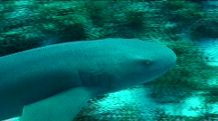 Shark Stock Footage