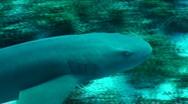 Shark Stock Footage