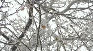 Stock Video Footage of Winter in oak tree wood