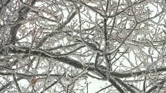 Winter in oak tree wood Stock Footage