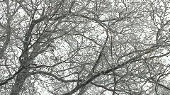 Winter in oak tree woods Stock Footage