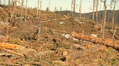 Deforestation logging industry ecological damage Stock Footage