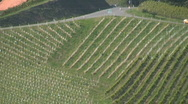 Stock Video Footage of Vineyards