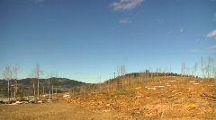 deforestation logging industry ecological damage - stock footage