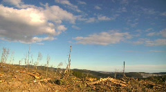 deforestation logging industry ecological damage - stock footage