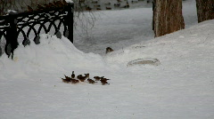 Sparrow feed and fly out in winter park Stock Footage