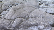 Fossilised Coral Stock Footage