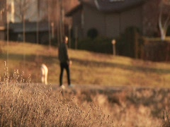Boy and dog walking beside road 02 - stock footage