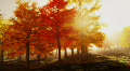 (1140) Sunshine Autumn Park Red Trees Afternoon LOOP Footage
