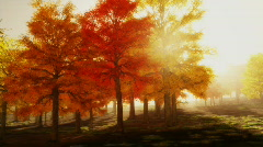 (1140) Sunshine Autumn Park Red Trees Afternoon LOOP Stock Footage