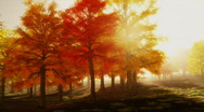 Stock Video Footage of (1140) Sunshine Autumn Park Red Trees Afternoon LOOP