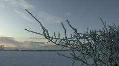 Frost encrusted twigs at dusk Stock Footage