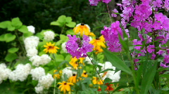 Garden flowers, zooming from the foreground to the background Stock Footage