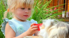 Little girl giving water to the Guinea pig Stock Footage