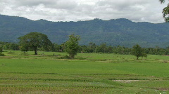 Laos: Newly planted rice field Stock Footage