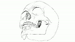 Skull sketch Stock Footage