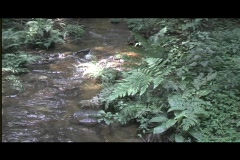 Pan from river to canopy Stock Footage
