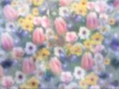 Spring garden p Stock Footage