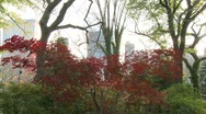 Central Park Autumn leaves Stock Footage