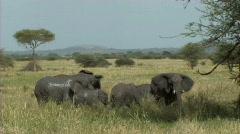 Elephant family bathing Stock Footage